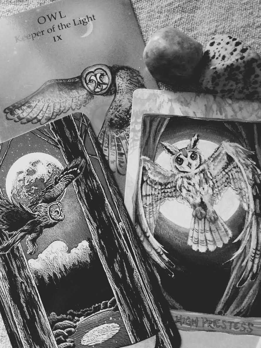 29 - Owls