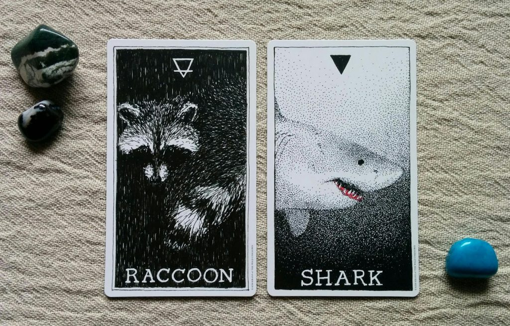 Raccoon & Shark (The Wild Unknown Animal Spirit by Kim Krans, copyright 2016)
